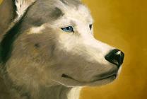Siberian Husky Thumbnail